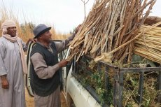 Collecting rocks and sticks to build the classroom. Photo credit Osama Thini