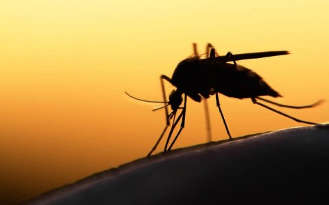 No malaria cases recorded in Tripoli, confirms official